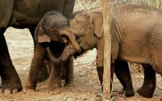 Bonding – true friendships are made at the Elephant Conservation Center